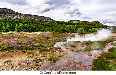 Hot springs in Haukadalur geothermal area along the golden ...