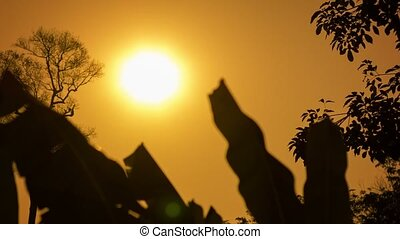 Hot sun over the tropical forest in the dry season. Thailand...