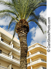 hotels and palm tree
