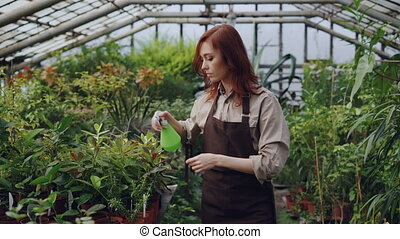 Hothouse worker wearing apron is watering plants and...