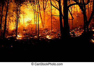 Hotter - Bushfire/Wildfire closeup at night Category...