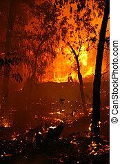 Hottest - Bushfire/Wildfire closeup at night