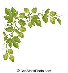 houblon, feuilles, fleurs, cônes