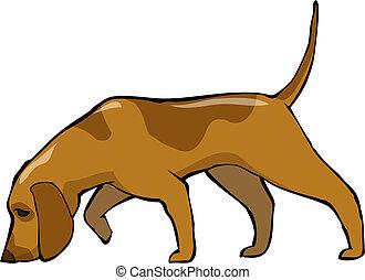Hound dog - Bloodhound dog on a white background vector...
