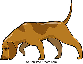 Bloodhound dog on a white background vector illustration