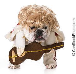 hound dog - english bulldog playing guitar isolated on white
