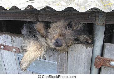 Hound Dog Houdini