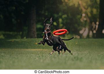 Hound dog in summer in the park