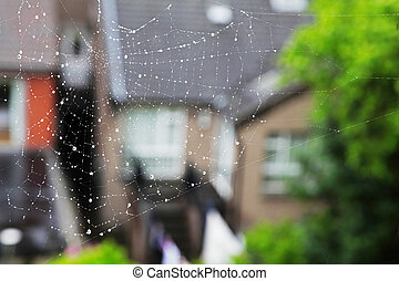 house and the grass could be seen through the web with sparkling drops