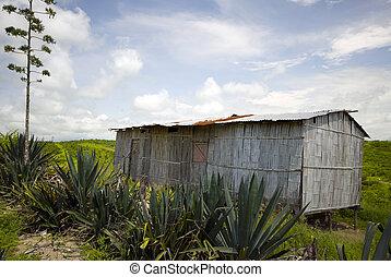 house ecuador - typical native house pacific coast ruta del ...