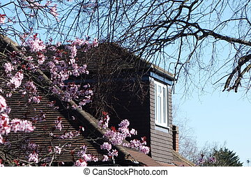 Attractive top floor house extension with pink blossom in foreground