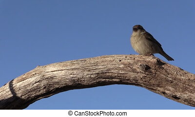 House Finch - a house finch perched on a log