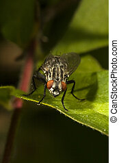 House fly on green leaf