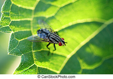 house fly on leaf