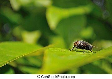 House fly sitting on green leaf