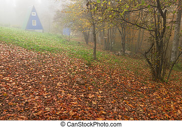 House foggy morning in the autumn forest