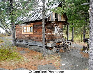 house hunting in the woods in forest