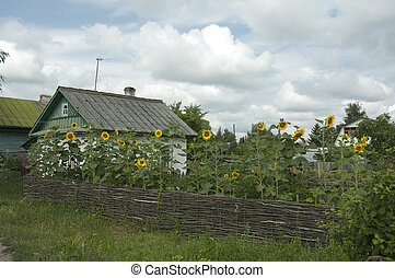 House in a village - Village house with a sunflowers in a...