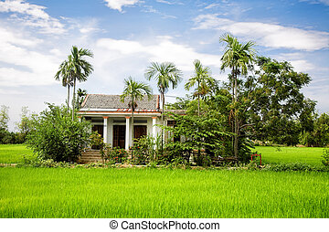 House in Green rice field, Vietnam