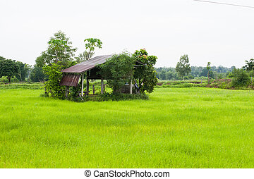 House in the green rice fields.