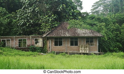 House in the Jungle, rice field Bali Indonesia - House in...