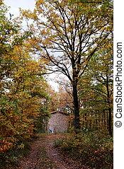 Little house in the oak tree forest in autumn