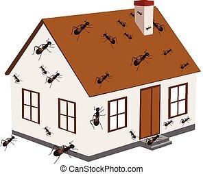 house infected with ants house infected with ants house infected with ants