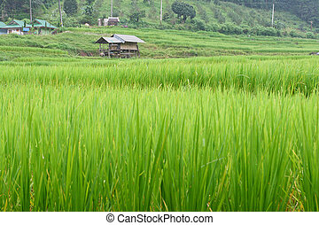 House on Rice Field