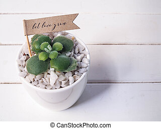 House plant in a ceramic pot on a wooden background