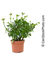 house plant in a pot