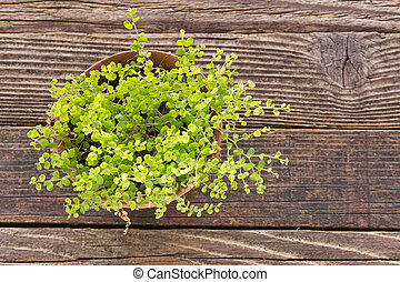 House plant in ceramic pot on wooden background