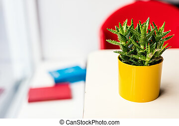 House plant in colorful yellow flower pot