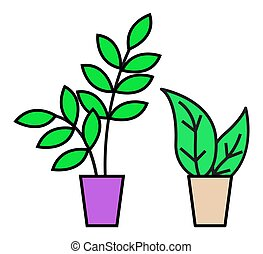 House Plant in Pots, Green Foliage, Decor for Home