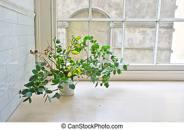 House plant - Leaves and twigs in avintage jug on a window ...