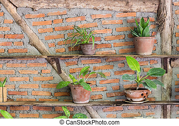 House plant on old wooden shelves and brick wall background