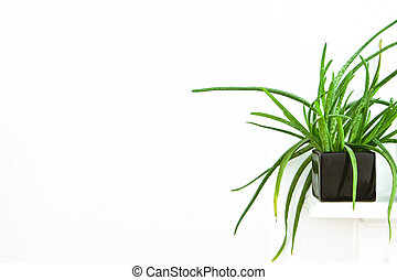House plant - Succulent house plant on a white mantle piece ...