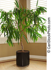 House plant - Tropical house plant in a pot and windows with...