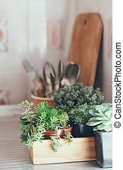 succulents in a wooden box - House plants, green succulents...