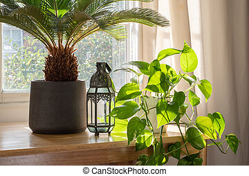 House plants in the window inside a beautiful new home or flat