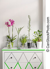Cropped shot of house plants standing on a white chest of drawers decorated with washi tape