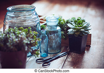 House plants, green succulents, old wooden box and blue...