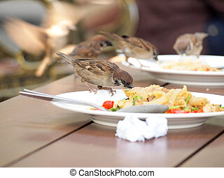 house sparrow standing on dish