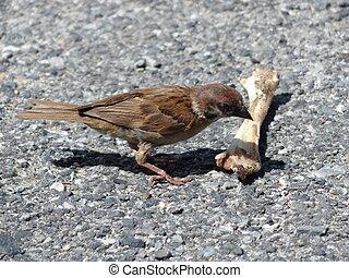house sparrow standing on floor