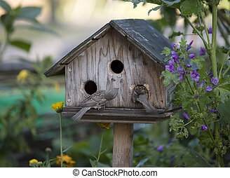 Bird house with two curious sparrows checking it out