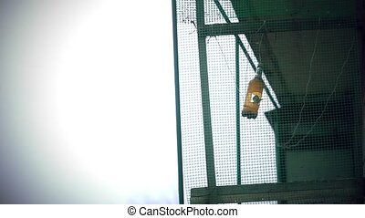 house sparrows on bird feeder. 1920x1080