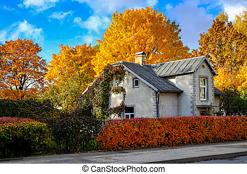 House surrounded by coloured trees on a sunny autumn day