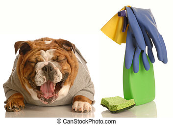 adorable bulldog sitting beside cleaning supplies laughing - concept of dog not being house trained