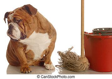 house training a bad dog - bulldog sitting beside mop and...