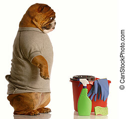 house training a dog - english bulldog standing up beside...