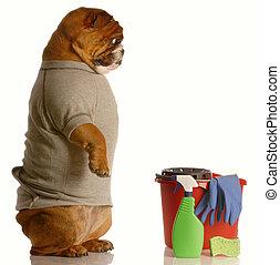 house training a dog - english bulldog standing up beside...